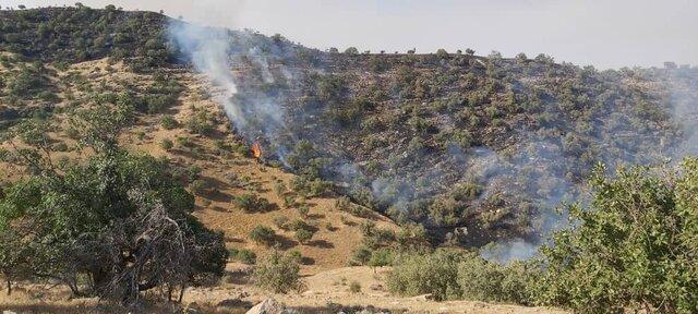 عمدی بودن 60 درصد آتش سوزی های جنگل ها و مراتع کهگیلویه و بویراحمد