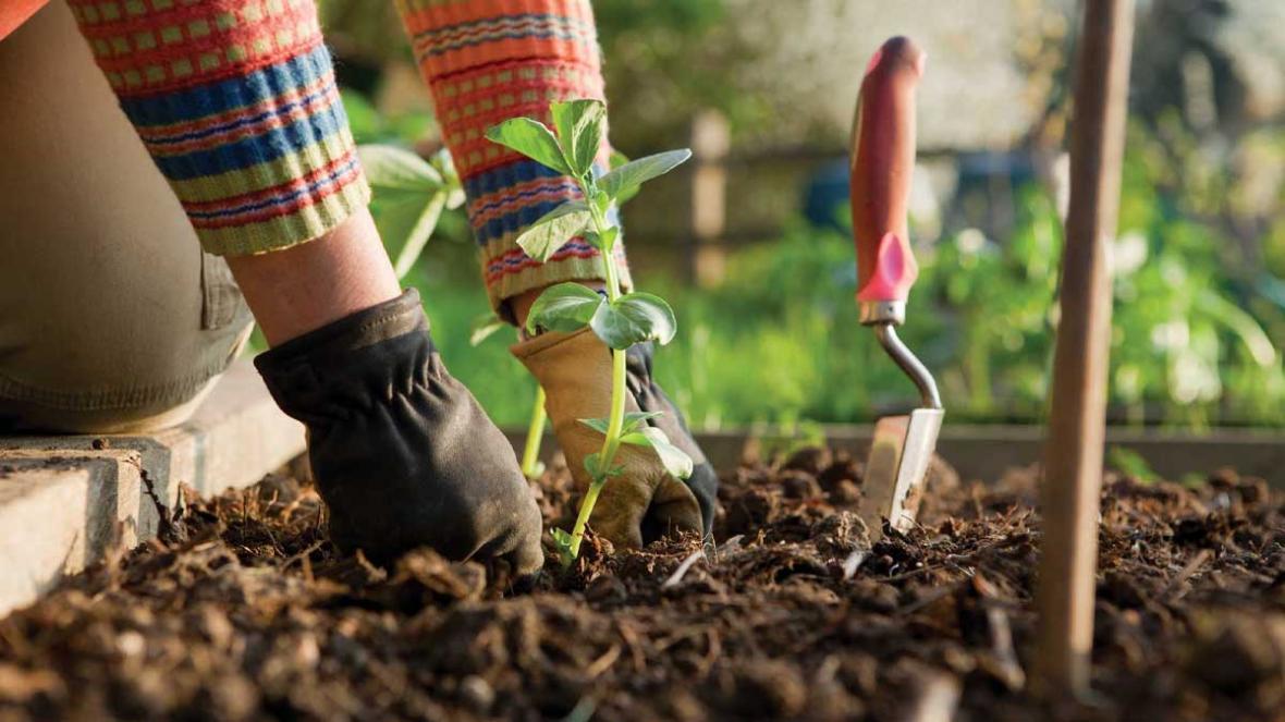 باغبانی در فصل پاییز را فراموش کنیم یا دریابیم؟!