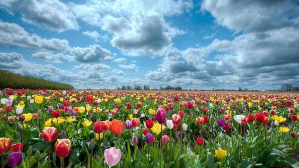 عکس گل برای پروفایل؛ مجموعه ای از عکس های جذاب برای پروفایل